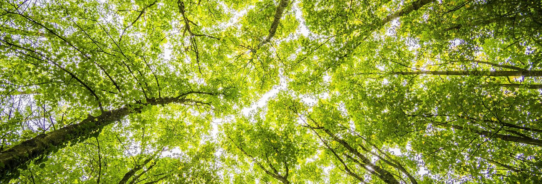 bomen voor de toekomst