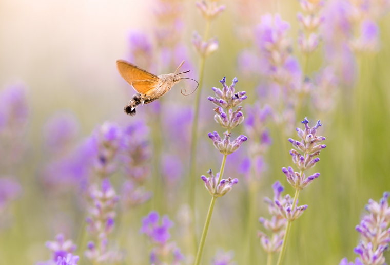 Cursus Biodiversiteit in de praktijk