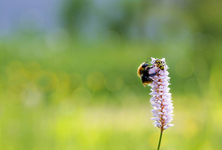Seminar Biodiversiteit